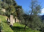 33 olive tree
