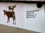 donkey event